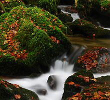 Little river in the Black Forest by Imi Koetz