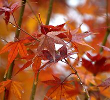 Rainy Day Autumn by Diana Graves Photography