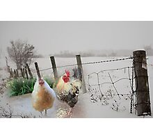 Farm talk - Making the best of winter Photographic Print