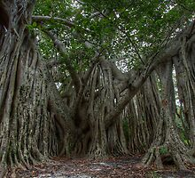 The Banyan Tree by Kyle Irizarry