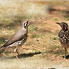 A pair of Thrushes by Maree Clarkson