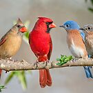 The Bluebirds Meet the Redbirds by Bonnie T.  Barry