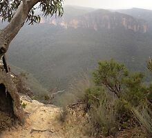 Tree at Hanging Rock by GeorgeOne