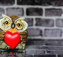 Owl Love by MMPhotographyUK
