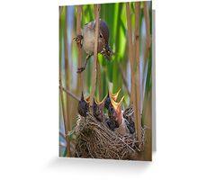 Reed Warbler feeding Chicks Greeting Card
