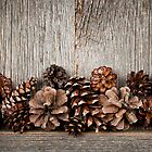 Rustic wood with pine cones by Elena Elisseeva