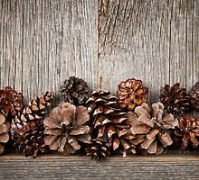 Rustic wood with pine cones by Elena Elisseeva