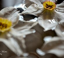 Floating Narcissus by AlexandraMartin