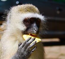 Monkey eating crisps by georgemurphy
