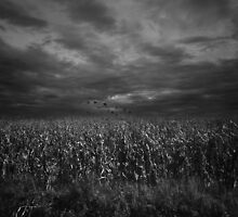 Italian corn field by antonela