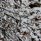 Snow Laden by Nevermind the Camera Photography