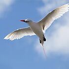 Red-tailed Tropicbird ~ Celestial by kim wormald