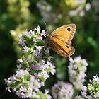 Gatekeeper Butterfly by ScoobyMoo