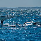 A pair of Whale Tails by Jaxybelle