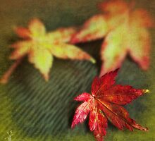 Fall by Amar-Images