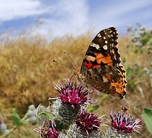 Butterfly having a breakfast by Brevis
