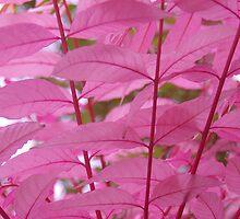 Pink tree by lezvee