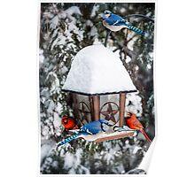 Birds on bird feeder in winter Poster