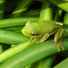 Green Frog by WildestArt