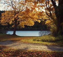 autumn rays by narklizard