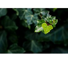 Find love in Nature Photographic Print
