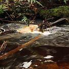 Cappuccino Creek by tinnieopener