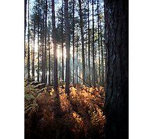 Autumn Sunrays Photographic Print