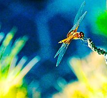 Dragonfly by Sassafras