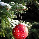 Red Christmas ball on fir tree by Elena Elisseeva