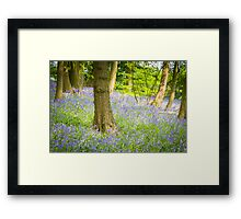 Bluebell Wood, Cheshire Framed Print
