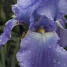 damp iris. by AnjiMarth