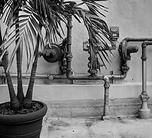 Potted Palm and Gas Lines - an Urban Still Life by njordphoto