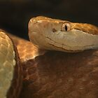 Copperhead by TheaDaams