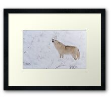 The Howl - Arctic Wolf Framed Print