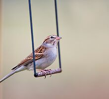 Swinging Sparrow by Bonnie T.  Barry