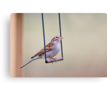 Swinging Sparrow Canvas Print