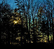 Sunset Through the Woods by Larry Llewellyn