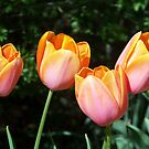 Orange Tulips by ninthcircle