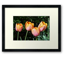 Orange Tulips Framed Print