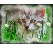 Adorable Neighborhood Kitten Photographic Print