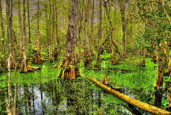 The Everglades in Florida by 242Digital