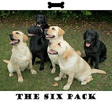 The Six Pack by Kate Brook
