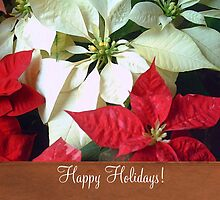 Mixed Color Poinsettias 2 Happy Holidays S1F1 by Christopher Johnson