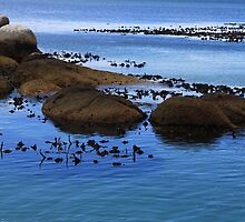 Boulders Beach by hausofsilva