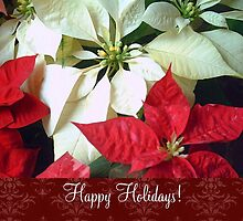 Mixed Color Poinsettias 2 Happy Holidays S5F1 by Christopher Johnson