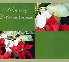 Mixed Color Poinsettias 2 Merry Christmas Q5F1 by Christopher Johnson