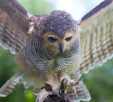 Watch Those Talons by byronbackyard