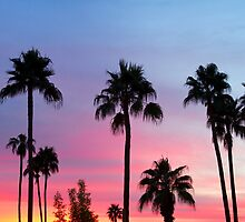 Paradise Palm Tree Sunset Sky by Bo Insogna