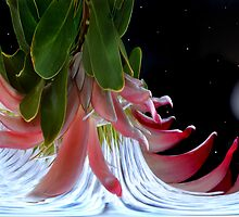 Planet Of King Protea. by Terence Davis