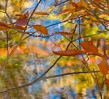 Fall colors and sky blue reflections. by LeighNilsen